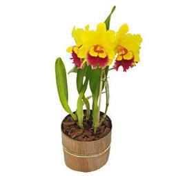 3 dicas básicas para ter uma bela orquídea   Orquídeas   Scoop.it