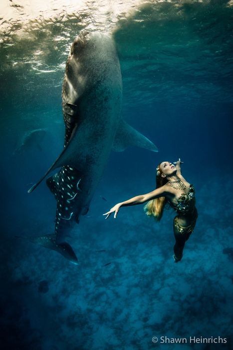 Spectacular Underwater Whale Shark Fashion Shoot - My Modern Metropolis | Design for a while | Scoop.it