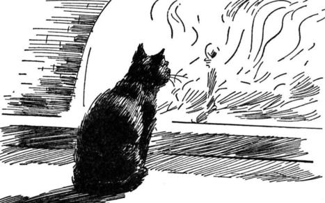 'The Black Cat' Questions for Study and Discussion | Gothic Fiction | Scoop.it