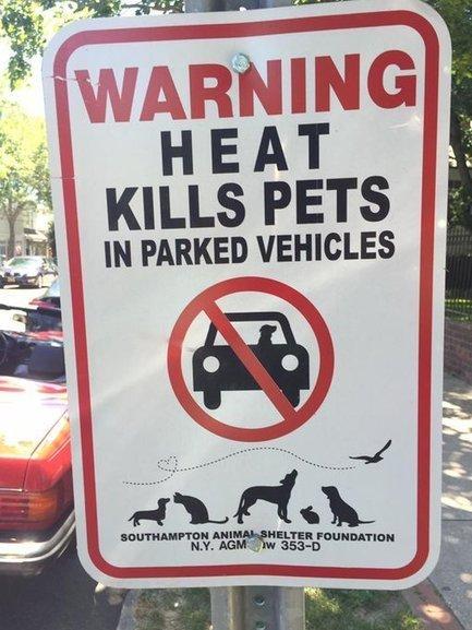 Tweet from @AmericanPetPros | Modern dog training methods and dog behavior | Scoop.it