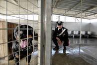 Disabile sbranata da cani in casa-canile - Top News - ANSA.it | News | Scoop.it