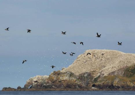 Perros-Guirec L'archipel des Sept îles, plus grande réserve d'oiseaux marins de France | LA #BRETAGNE, ELLE VOUS CHARME - @Socialfave @TheMisterFavor @TOOLS_BOX_DEV @TOOLS_BOX_EUR @P_TREBAUL @DNAMktg @DNADatas @BRETAGNE_CHARME @TOOLS_BOX_IND @TOOLS_BOX_ITA @TOOLS_BOX_UK @TOOLS_BOX_ESP @TOOLS_BOX_GER @TOOLS_BOX_DEV @TOOLS_BOX_BRA | Scoop.it