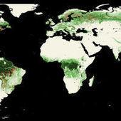 Les forêts mondiales sous l'œil de Google | Biodiversité & Relations Homme - Nature - Environnement : Un Scoop.it du Muséum de Toulouse | Scoop.it