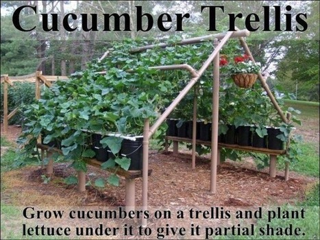 Urban Soul Farmer | diyprepping: This is a fantastic idea and you... | Wellington Aquaponics | Scoop.it
