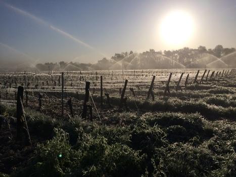 Gel sur les vignobles atlantiques et ligériens : état des lieux | Winemak-in | Scoop.it