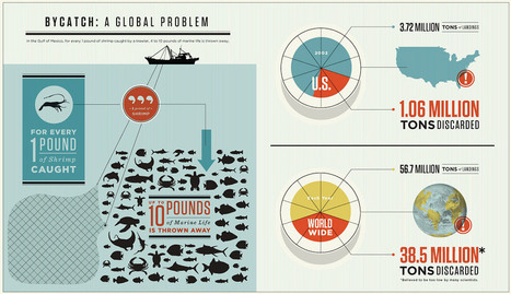 #bycatch   #infographic  ~ A global problem! | Rescue our Ocean's & it's species from Man's Pollution! | Scoop.it