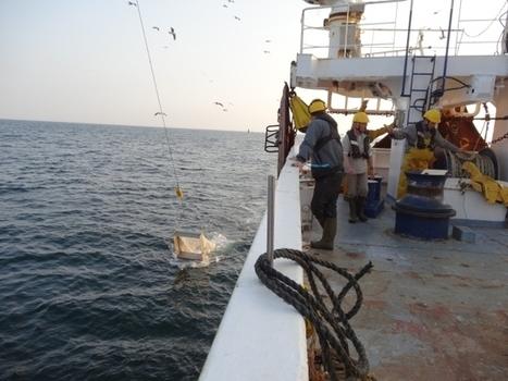 Allons  compter les poissons / France Inter | Biodiversité | Scoop.it