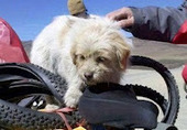 Bunny's Blog: Stray Dog Completes 1,100 Mile Run Across China | Pet News | Scoop.it