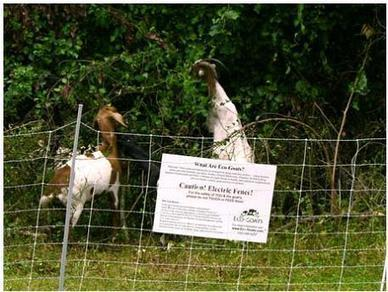 Goats to the Rescue | Suburban Land Trusts | Scoop.it