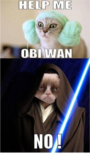 Grumpy Cat Internet Meme Invades Star Wars | AWESOME | Scoop.it