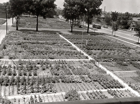 Why Victory Gardens Still Matter -- Bonnie Plants | Anything Goes in the Garden | Scoop.it