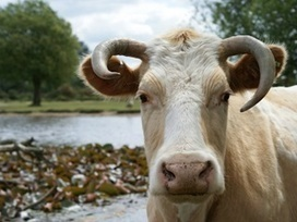 Grab the Collaboration Bull by the Horns | Social Business and Digital Transformation | Scoop.it