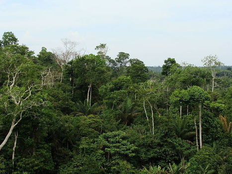 Three Amazon nations, three approaches to reducing deforestation | Rainforest EXPLORER:  News & Notes | Scoop.it