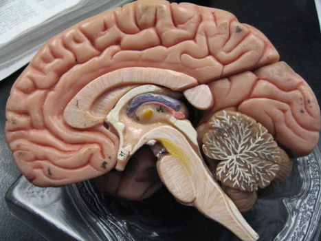 Brains of People With Schizophrenia Try to Repair Themselves: Study | Teacher's corner | Scoop.it