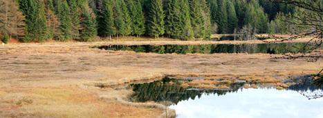 Zones humides : un troisième plan d'action pour tenter de les protéger   CACG - Water &Territorial Devloppment -----Eau & Développement Territorial   Scoop.it