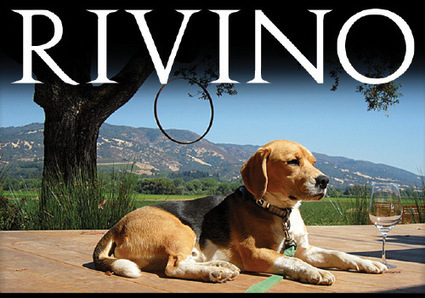 Rivino Winery, Ukiah - 101 Things To Do Mendocino County | Mendocino County Living | Scoop.it