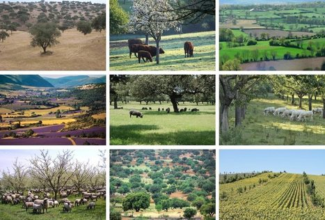 2016 EURAF Conference, Montpellier 23-25 May 2016 | EURAF | qqs infos sur le centre Inra Montpellier | Scoop.it