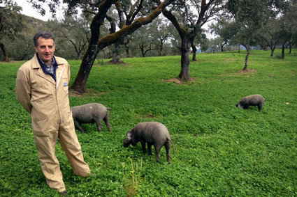 This Spanish Pig-Slaughtering Tradition Is Rooted In Sustainability | JWK Geography | Scoop.it