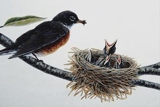 American Robin | Daily facts | Scoop.it