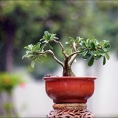 12 Most Inspiriting Bonsai Leadership Lessons | Coaching Leaders | Scoop.it