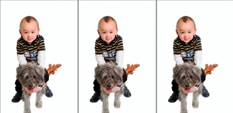 Pet photography tips and tricks   Dog cooling mats and dog cooling beds   Scoop.it