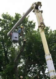 Tree trimming and removal in Dallas, TX by Lovett Tree Service | Lovett Tree Service | Scoop.it