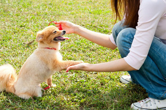 What You Need To Know About Helping Your Dog - Women's Suite | ponder this | Scoop.it