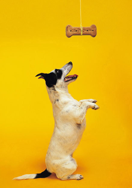 Brain Mechanism For Reward Enjoyment - New Insight   Psychology and Brain News   Scoop.it