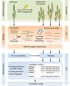 Nat Biotech: Rapid cloning of disease-resistance genes in plants using mutagenesis and sequence capture | Plant pathology | Scoop.it