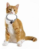 ASPCA | Top 10 Ways to Prevent Animal Cruelty | Animal Adventures | Scoop.it
