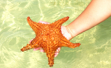 A Beautiful Real Life Twist on the Famous Starfish Rescue Story | This Gives Me Hope | Scoop.it