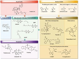 Spatial and temporal control of fungal natural product synthesis | Marine Natural Products | Scoop.it