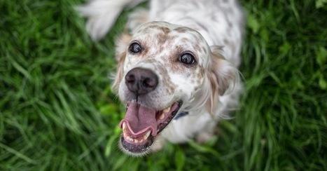 Companion Animal Psychology: Seven Reasons to Use Reward-Based Dog Training | Modern dog training methods and dog behavior | Scoop.it