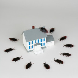 A Homeowner's Guide to the Most Common Household Pests PART – I - tips by Mills Termite & Pest Control | Mills Termite & Pest Control | Scoop.it