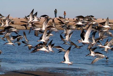 Galveston Oil Spill Threatening Crucial Bird Refuge | All about water, the oceans, environmental issues | Scoop.it