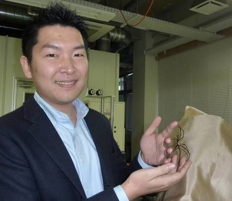Yamagata biotech firm synthesizes spider silk to spin web of innovative products | Dernières  nouvelles | Scoop.it