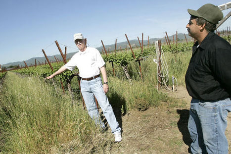 Napa wine industry warned of future climate threat | Vitabella Wine Daily Gossip | Scoop.it