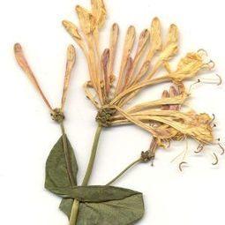 Herbario Universidad de Navarra. | Recursos de Botánica para Secundaria | Scoop.it