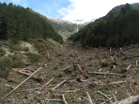 Les dégâts de l'hiver : avalanche à Péguère - Jean-Jacques Héran | Vallée d'Aure - Pyrénées | Scoop.it