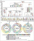 In silico archeogenomics unveils modern plant genome organisation, regulation and evolution | Archaeobotany and Domestication | Scoop.it