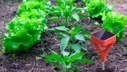 Soil IQ Makes A Smart Probe For Your Garden | TechCrunch | Healthy Recipes and Tips for Healthy Living | Scoop.it