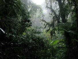 Reves aventures: Costa Rica - PUNTARENAS et MONTEZUMA | Reves aventures | Scoop.it