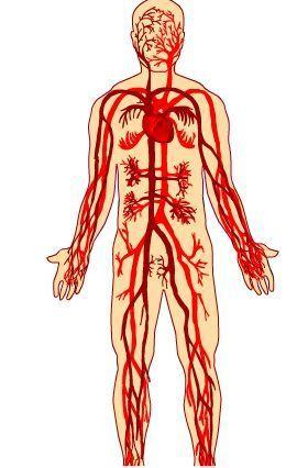 El sistema circulatorio | EDUDIARI 2.0 DE jluisbloc | Scoop.it