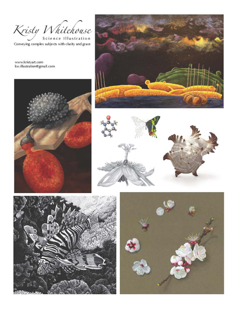 kristyart science illustration | Nature as a substrate:  art and craftwork | Scoop.it