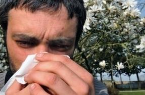 Allergies : attention aux pollens de bouleau cette semaine   Steribed   Scoop.it