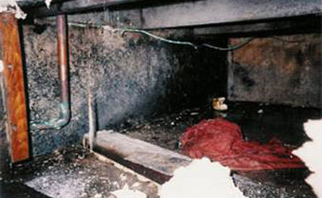 Mold Prevention and Diagnosis | Mold Removal Helthy Homes Inc | Scoop.it