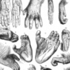 Biological Anthropology | Learn Science at Scitable | Anthropology, Archaeology, and History | Scoop.it