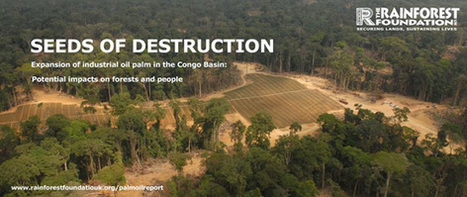 AFRICA: PALM OIL Developers Threaten Africa's Rainforests | Biodiversity IS Life  – #Conservation #Ecosystems #Wildlife #Rivers #Forests #Environment | Scoop.it