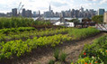 New York's growing demand for green roofs | Habitat Restoration and Sustainable Gardening | Scoop.it
