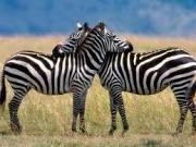 Uganda the Pearl of Africa   Uganda Travel Ideas   Scoop.it